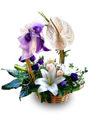 Korpa anturijum ruže