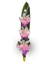Buket trio orhideja